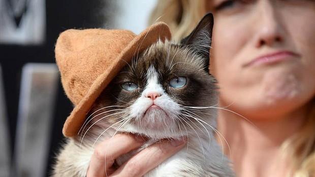 wide-grumpy-cat-mtv-movie-awards-620x349
