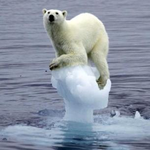 climatechangepolarbear.png